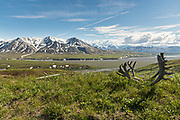 View of the the Alaska Range, Denali and the McKinley River with Moose antlers from the Eielson Bluffs in Denali National Park Alaska. Denali National Park and Preserve encompasses 6 million acres of Alaska's interior wilderness.