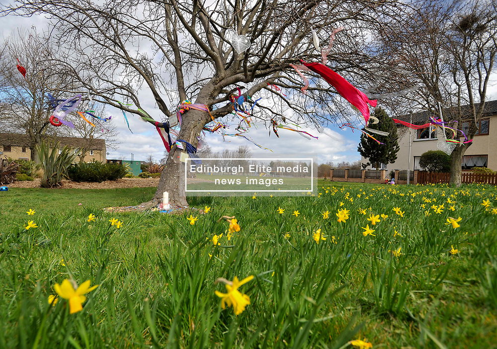 A tree and houses decorated with rainbow colours makes a bright addition to the spring daffodils in Ratho Station outside Edinburgh during the current Coronavirus pandemic lockdown in Edinburgh.<br /> <br /> © Dave Johnston / EEm