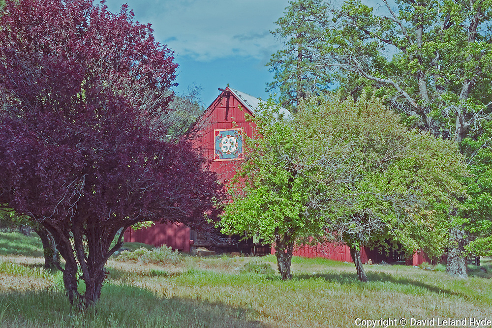 Heart K Barn, Spring, Genesee Valley, Heart K Ranch, Fruit Trees, Plums, Apples, Tall Grass, Plum Trees, Apple Trees, Ponderosa Pine, Sierra Nevada Mountains, California Mountains
