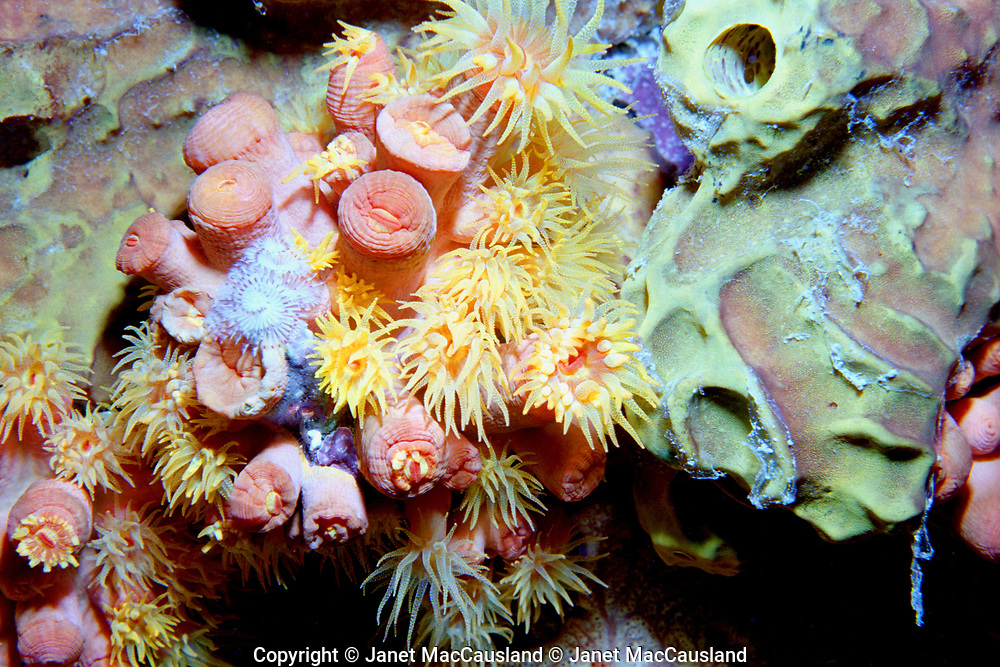 """People like the pastel colors of this """"Town Pier Sponges & Cup Coral"""". Today the Bonaire Town Pier is too busy for divers. Even when this pre-digital photograph was taken, special advanced permission was required."""