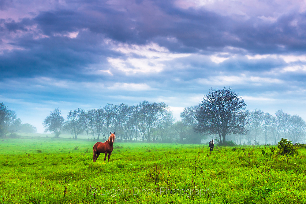Couple of horses on pasture at green meadow