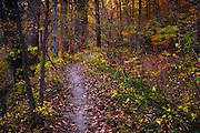 The Mill Race Trail in Oella, fall.