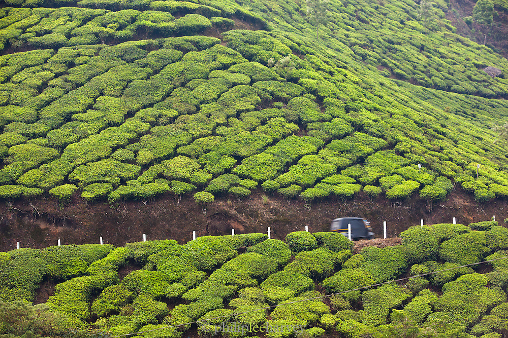 A tuk tuk on a road cutting through the tea plantations in Munnar, a hill station in Kerala, India