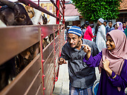 """22 AUGUST 2018 - GEORGE TOWN, PENANG, MALAYSIA: A man and his daughter look at the goats that will be sacrificed for Eid al-Adha at Kapitan Keling Mosque in George Town. It is the oldest mosque in George Town. Eid al-Adha, """"Feast of the Sacrifice"""" is the second of two Islamic holidays celebrated worldwide each year. It honors the willingness of Ibrahim (Abraham) to sacrifice his son as an act of obedience to God's command.    PHOTO BY JACK KURTZ"""