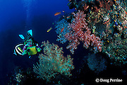 diver on Liberty Wreck with bannerfish, soft corals, and basslets, Bali, Indonesia MR 270