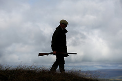 © Licensed to London News Pictures. 13/08/2016. Swinithwaite, UK. A man carrying a shotgun makes his way across the moor during a grouse shoot high on the Yorkshire moors in Swinithwaite, North Yorkshire. Yesterday was the glorious 12, the day that traditionally marks the start of the grouse shooting season. Photo credit : Ian Hinchliffe/LNP
