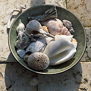 shells in bowl