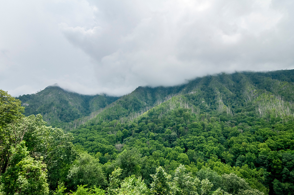 Chimney Tops (left) and Sugarland Mountain (right) shrouded in a cloud at the Chimney Tops Overlook in Great Smoky Mountains National Park in Gatlinburg, Tennessee on Thursday, August 13, 2020. Copyright 2020 Jason Barnette
