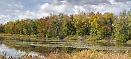 Fall foliage colours along the Baie Parisien (Parisian Bay) at the Parc national de Plaisance in Plaisance, Québec, Canada.