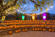 Desert Botanical Garden Boo-tanical Nights