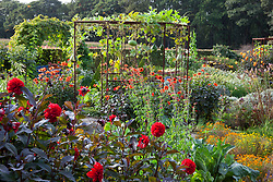 Mixed gourds - Lagenaria - growing over a metal pergola with Dahlia 'Olympic Fire' around the base in the potager at De Boschhoeve.