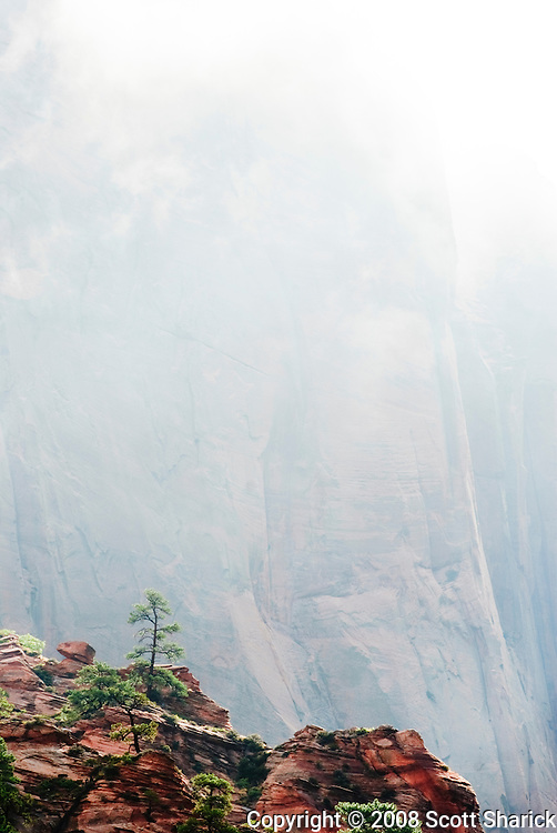 A picture of a tree on a rock ledge in the Kolob Canyon section of Zion National Park in Utah. The distant rock cliffs are partially obscured by fog. Missoula Photographer