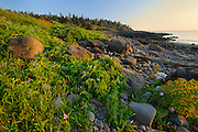 Sunset on beach with seaweed at Flower's Cove<br /> Long Island on the Digby Neck<br /> Nova Scotia<br /> Canada