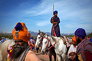 Nihangs, armed Sikh warriors, wear blue or saffron turbans. A young Nihang who raced standing stride two horses, watches the crowd disperse at the end of the Hola Mohalla festival.