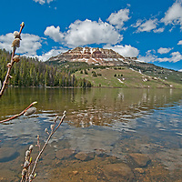 Beartooth Butte reflects in Beartooth Lake in the Absaroka Range of Wyoming, near Yellowstone. Willows bud in the foreground.