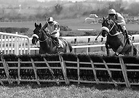 Punchestown Horse Races, in Punchestown, Kildare, 26/04/1995 (Part of the Independent Newspapers Ireland/NLI Collection).