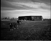 THE ATLANTIC WALL. .pic shows: HOLLAND. BUNKER USED BY FARMER TO HOUSE SHEEP AT SINT JANSKERKE ON WALCHEREN WEST OF MIDDELBURG. THE BUNKER WAS PART OF THE DEFENCE OF THE SCHELDE RIVER AND THE PORT OF ANTWERP..WORLD WAR TWO ENDED IN EUROPE IN MAY 1945, THIS YEAR SEES THE 60th ANNIVERSARY OF THAT VICTORY..THE ATLANTIC WALL BUILT BY GERMANY IN WORLD WAR 2 STRETCHED FROM NORWAY VIA DENMARK, HOLLAND, BELGIUM AND FRANCE TO THE SPANISH BORDER. THE MAIN CONCENTRATION OF BUNKERS,BLOCKHOUSES AND DEFENCES WERE ALONG THE DUTCH, BELGIAN AND FRENCH COASTAL AREAS MOST UNDER THREAT FROM AN ALLIED INVASION. THE CONSTRUCTION OF THE WALL BEGAN IN 1942 AND CONTINUED UP UNTIL THE JUNE 6th ALLIED INVASION ON D-DAY IN 1944..TENS OF THOUSANDS OF WORKERS AND PRISONERS FROM THE GERMAN OCCUPIED AREAS OF EUROPE WERE EMPLOYED BY THE ORGANISATION TODT NAMED AFTER FRITZ TODT, THE GERMAN ENGINEER WHO DIED IN 1942 (TO BE SUCEEDED BY ALBERT SPEER) IN THE BUILDING WORK. BETWEEN THE RIVERS LOIRE AND DIVES 87,257 WORKERS WERE USED INCLUDING 55,000 FRENCHMEN, 11,500 GERMANS, 4,200 DUTCH, 6.600 BELGIANS, 2,600 NORTH AFRICANS AND SEVERAL THOUSAND FROM EASTERN EUROPE..THE ATLANTIC WALL WAS THE LARGEST BUILDING PROJECT SINCE THE ROMAN EMPIRE. MANY OF THE COLOSSAL GUN BUNKERS AND UNDERGROUND DEFENSIVE CHAMBERS REMAIN. SOME HAVE FALLEN FROM CLIFF TOP POSITIONS WHILE OTHERS ARE PARTLY CONSUMED BY SAND DUNES. THE RAVAGES OF WAR, TEN THOUSAND TON BOMBS AND 60 YEARS OF COASTAL WEATHER HAVE HARDLY AFFECTED THESE LEVIATHAN LIKE STRUCTURES WHICH LOOK LIKELY TO LAST AS LONG AS THE RUINS OF ANCIENT ROME. A FITTING REMINDER OF A WORLD THAT COULD HAVE BEEN FROM 60 YEARS AGO..COPYRIGHT PHOTOGRAPH BY BRIAN HARRIS  © 2005.07808-579804