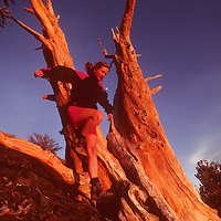 Meredith Nelson (MR) runs by ancient Bristlecone Pine in White Mts., CA.