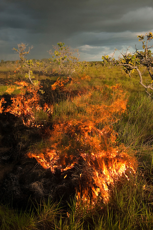 Fire in Savannah<br /> Rupununi<br /> GUYANA<br /> South America