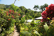 A vast array of tropical plants on sale at the St. Rose Nursery owned by John Criswick;  La Mode, St. George's, Grenada, Caribbean, West Indies