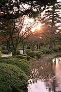 The setting sun shining through autumn Prunus leaves beside  a stream in the Kenrokuen Garden, Kanazawa, Ishigawa, Japan
