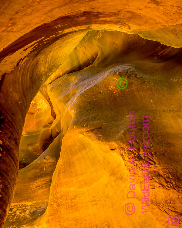 Sandstone in a narrow canyon that has been sculpted by eons of water flow, with illumination from sunlight bouncing off nearby sandstone, North Fork of the Virgin River, © David A. Ponton