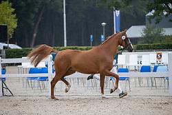 024, Mariana A<br /> Nationaal Kampioenschap KWPN<br /> 3 jarige springmerries<br /> © Hippo Foto - Dirk Caremans<br />  15/08/2020