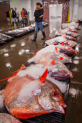 opah or moonfish, Lampris guttatus<br />  = Lampris regius, and other locally caught fish on pallets on the auction floor, living in open ocean at depth of 50 - 500 meters and weighing as much as 200 pounds (90 kg), Honolulu Fish Auction by United Fishing Agency, the only fresh tuna auction in the US, up to 160,000 pounds of fish can be auctioned in a day, Pier 38, Commercial Fishing Village, Honolulu, Oahu, Hawaii, USA