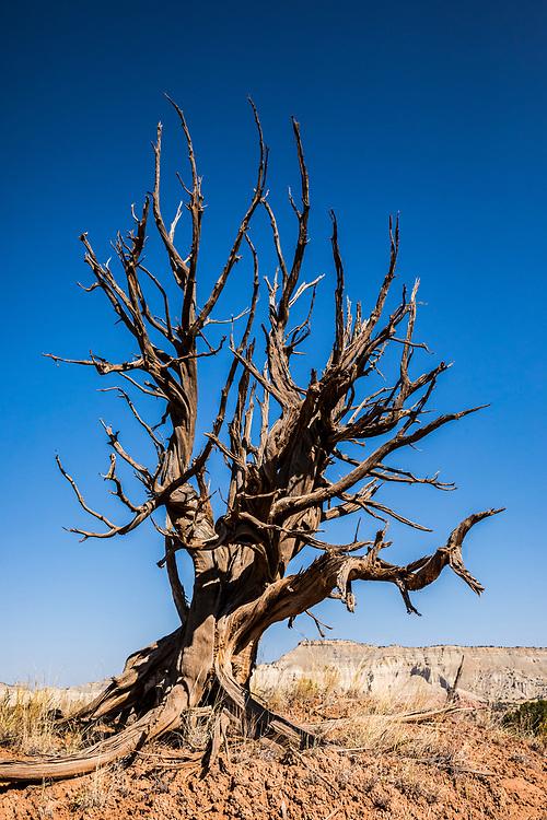 An old tree snag at Kodachrome Basin State Park, Utah, USA.