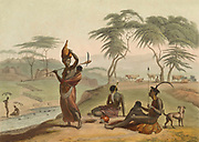 hand colored plate from the collection of  ' African scenery and animals ' by Daniell, Samuel, 1775-1811 and Daniell, William, 1769-1837 published 1804