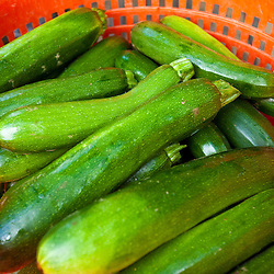 Fresh picked zucchini at Heron Pond Farm in South Hampton, New Hampshire.