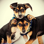 Two shelter puppies adopted.  ©Anne Chadwick Williams
