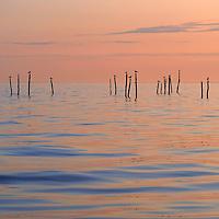Baltic Sea with gulls - Møn, Denmark