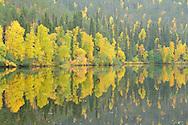 Autumn colour landscape, Oulanka River, Finland.