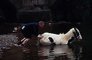 A traveler pushes his piebald horse to be  washed in the river before being sold at Appleby fair. Romany Gypsies at Appleby Fair, Cumbria. The most important annual Gypsy horse fair whre Romany Gypsies and travelers meet to trade their wares...English Romany Gypsies traditionally traveled the country roads camping nearby towns and villages, choosing the grassy roadside banks, where they tethered their horses, or in farmer's fields, when they were allowed. Travelling in bowtop wagons drawn by horses, and before that with tents, sometimes with horse drawn carts or just by foot. Often they worked as casual agricultural labourers, doing the seasons work. They also could earn their living in different ways, sometimes selling their wares, brass, tin, wood and cloth, such as embroidered cloths or lace, telling fortunes, music and dancing, and through crafts skills in basket making, plaiting chair bases, sharpening knives,  They would make fires from old wood, cleaning up after them when they moved on. There were several horse fairs, notably Appleby in Cumbria and Stow-on-Wold in the Cotswolds where they trade and sell horses, some traditions which keep to this day.