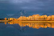 Yellow aspen and Mt Moran, Grand Teton National Park, Wyoming