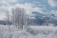 A wintery landscape, Alaska