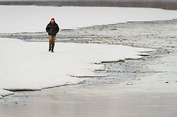 Steve Lewis, Raptor Management Coordinator, U.S. Fish & Wildlife Service, walks on the gravel bar of the Chilkat River in the Alaska Chilkat Bald Eagle Preserve after placing camouflage on a net launcher that he is using to capture bald eagle. The net launcher, along with leg snare traps, is being used to capture bald eagles that will be used in a study being conducted by Rachel Wheat, a graduate student at the University of California Santa Cruz. Wheat is conducting a bald eagle migration study of eagles that visit the Chilkat River for her doctoral dissertation. She hopes to learn how closely eagles track salmon availability across time and space. The bald eagles are being tracked using solar-powered GPS satellite transmitters (also known as a PTT - platform transmitter terminal) that attach to the backs of the eagles using a lightweight harness. Pictured in the background is the Tlingit village of Klukwan. During late fall, bald eagles congregate along the Chilkat River to feed on salmon. This gathering of bald eagles in the Alaska Chilkat Bald Eagle Preserve is believed to be one of the largest gatherings of bald eagles in the world.