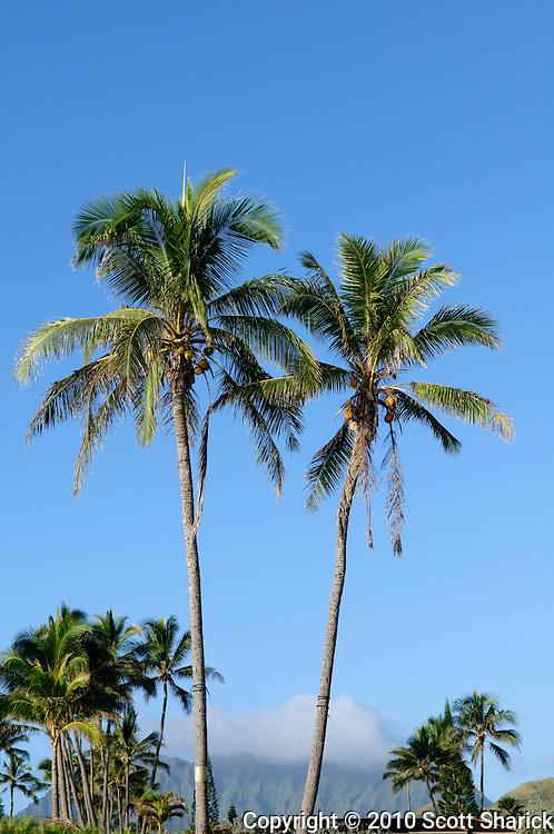 Palm trees along Kailua Beach with the Koolau Mountains in the distance.