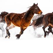 201908 Julia Snow Horses