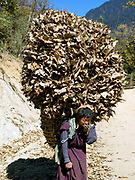 A woman wearing a kira, the Bhutanese national dress carries a large load of dried leaves to use as animal bedding, Daimji village, Western Bhutan. The kira is the national dress for women in Bhutan. It is an ankle-length dress consisting of a rectangular piece of woven fabric, wrapped and folded around the body and pinned at both shoulders, usually with silver brooches, and bound at the waist with a long belt. Women's hair is usually cut short. Despite rapid urbanisation, the majority of people, 66% of all households, still live in rural Bhutan, most dependent on the cultivation of crops and livestock breeding.