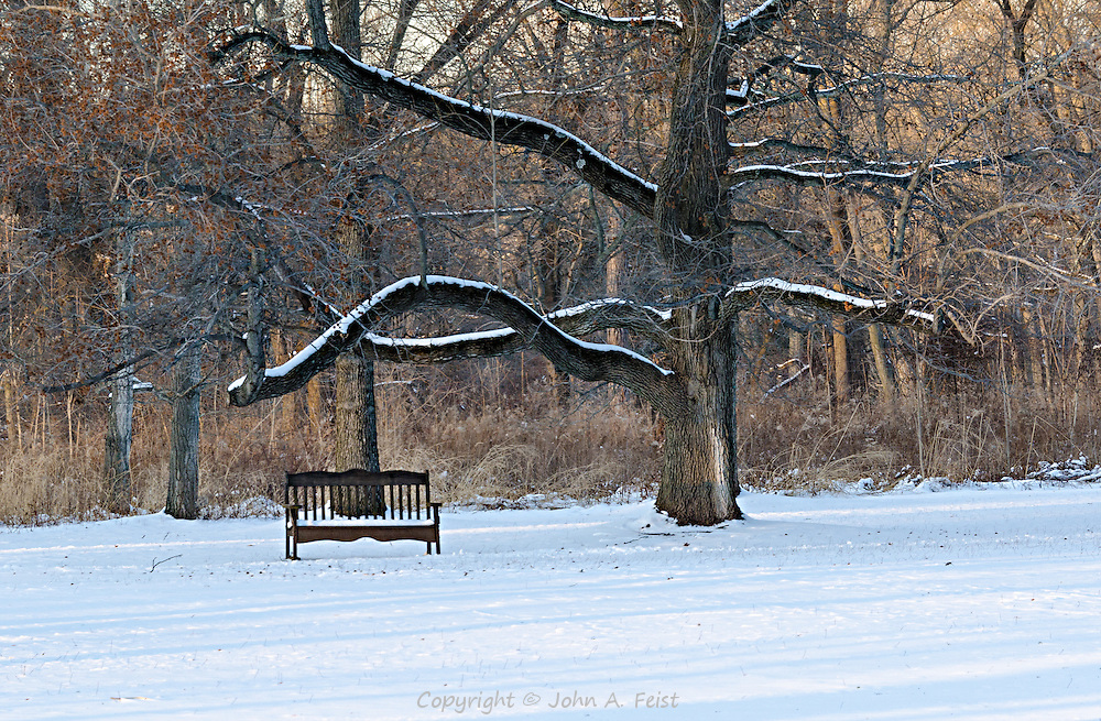 The late day shadows help to accent this peaceful scene at Duke Farms, Hillsborough, NJ.  The tree is clearly old and grows in many directions including one branch that looks like it's sheltering the bench.  The setting sun is casting wonderful shades of yellow and gold across the scene.