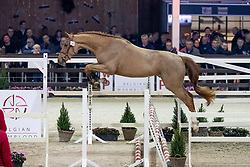 118, Vendredi J&F Champblanc Z<br /> Hengstenkeuring BWP - Lier 2019<br /> © Hippo Foto - Dirk Caremans<br /> 18/01/2019
