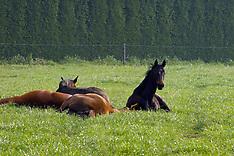 FOALS AND HORSES