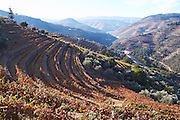 vineyards view to pinhao quinta do noval douro portugal