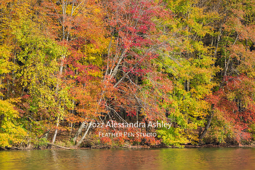 Early morning sun lights the shoreline of the Clear Fork Reservoir in autumn.