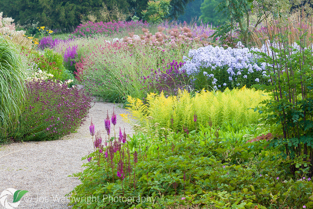 A path through the Floral Labyrinth at Trentham Gardens, Staffordshire, designed by Piet Oudolf. Photographed in summer planting includes Astilbes, Solidago, Knautia macedonica and Phlox paniculata