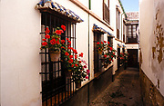 Geraniums in pots outside houses in narrow alleyway of the histpric old town, Ronda, Andalucia, Spain