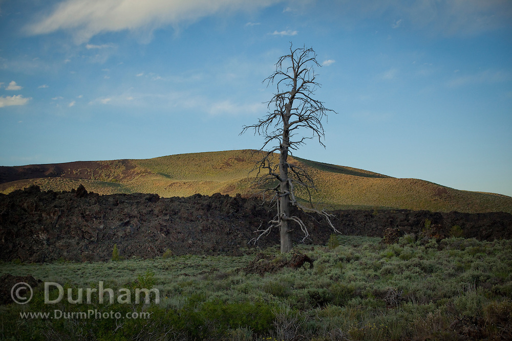 An old snag near an ancient lava flow in Craters of the Moon National Monument, Idaho.