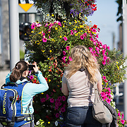 16.08.2016    <br /> Limerick City and County Council, Flowers, Clancy Strand, Treaty Stone, Limerick City. Picture: Alan Place